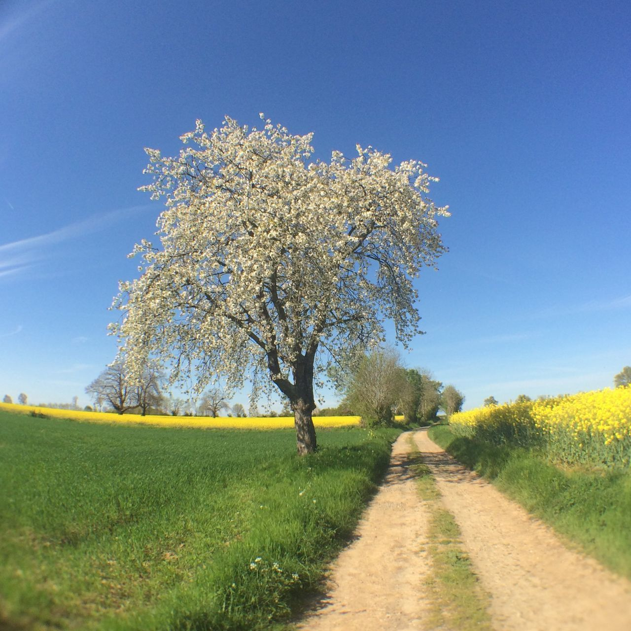 Beautiful stock photos of europe, Beauty In Nature, Blue, Champdeniers-Saint-Denis, Clear Sky
