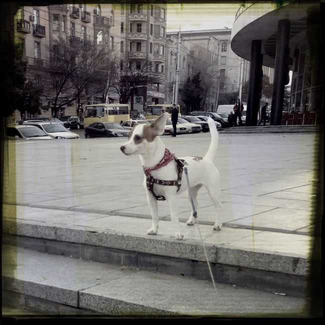 Enjoying Life Jackrussell My Dog ;D Dog