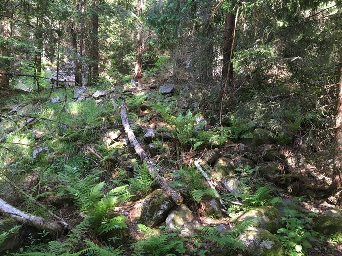 Forest shade Beauty In Nature Day Fallen Log Fallen Tree Forest Forest Floor Forest Park Forests Green Green Color Growing Growth Landscape Lush Foliage Nature No People Outdoors Plant Rocks On The Forest Floor Shady Forest Tranquility Tree Tree Trunk Vitosha Vitosha Mountain