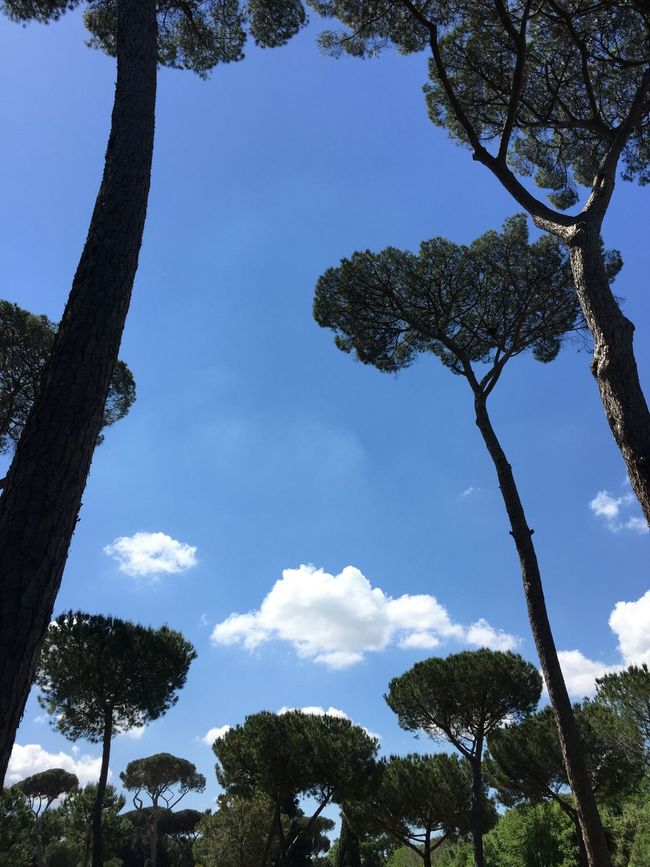 Beautiful Trees Perspective Sky And Clouds Villa Borghese Park
