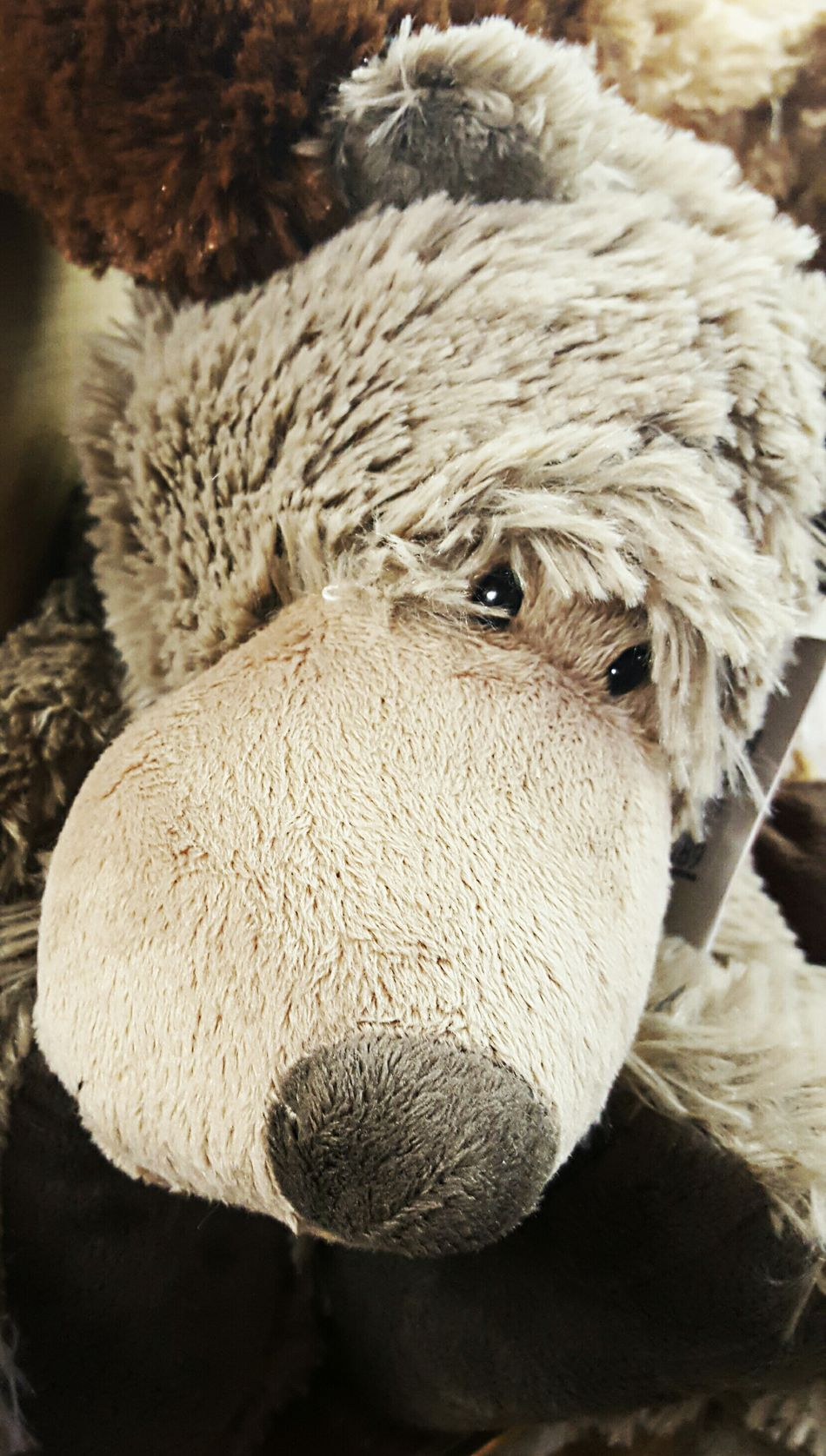 Cute stuffed animal Close-up No People November 2016 For Kids Close-upFor Adults Store On Main Street Lots To See One Animal Animal Themes Nature Sheep One Animal No People Downtown