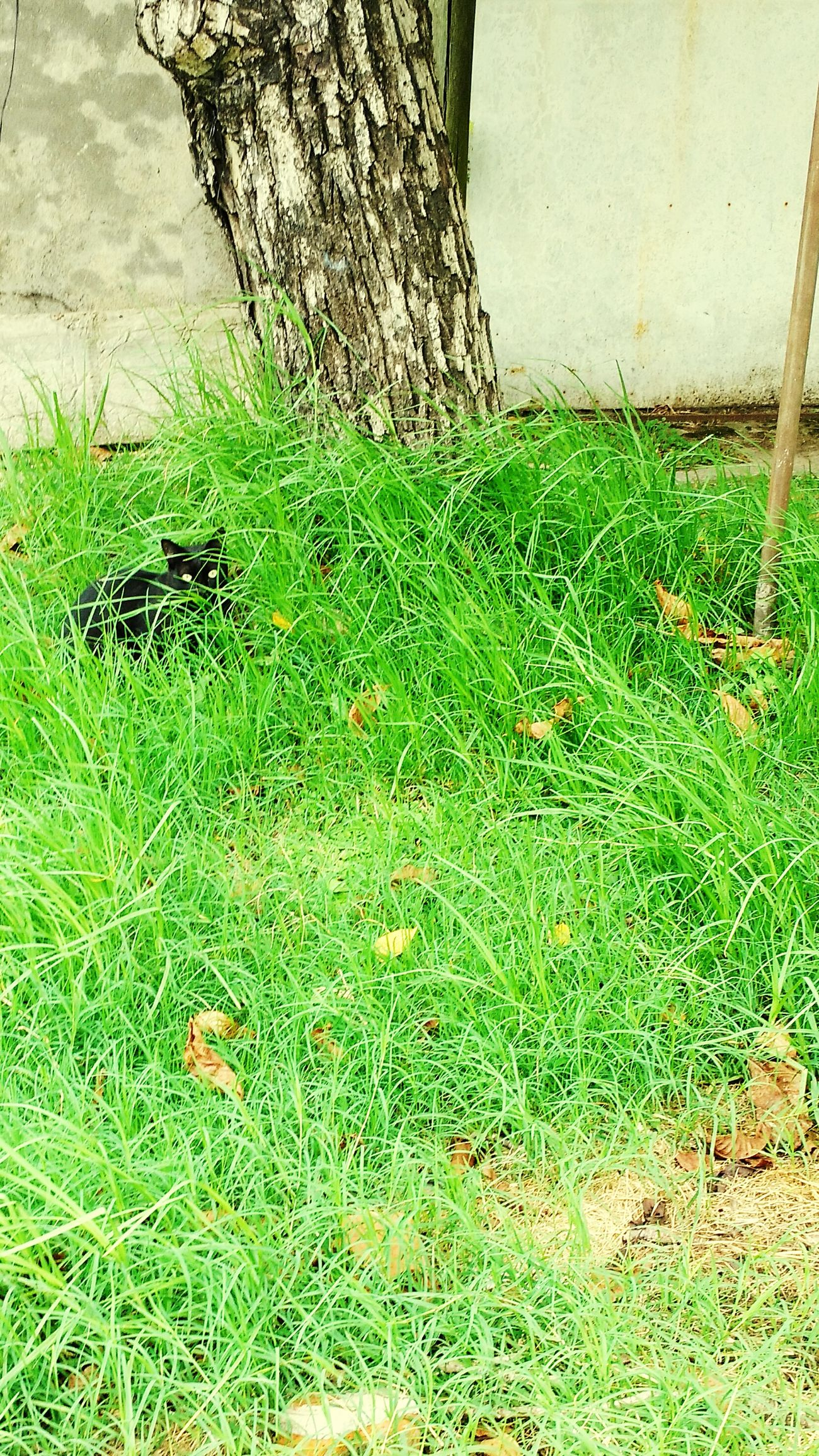 Green Color No People Grass Nature Cats 🐱 One Animal Cat Eyes Catlovers Cat♡ Cats Of EyeEm BLackCat Blackcatlove
