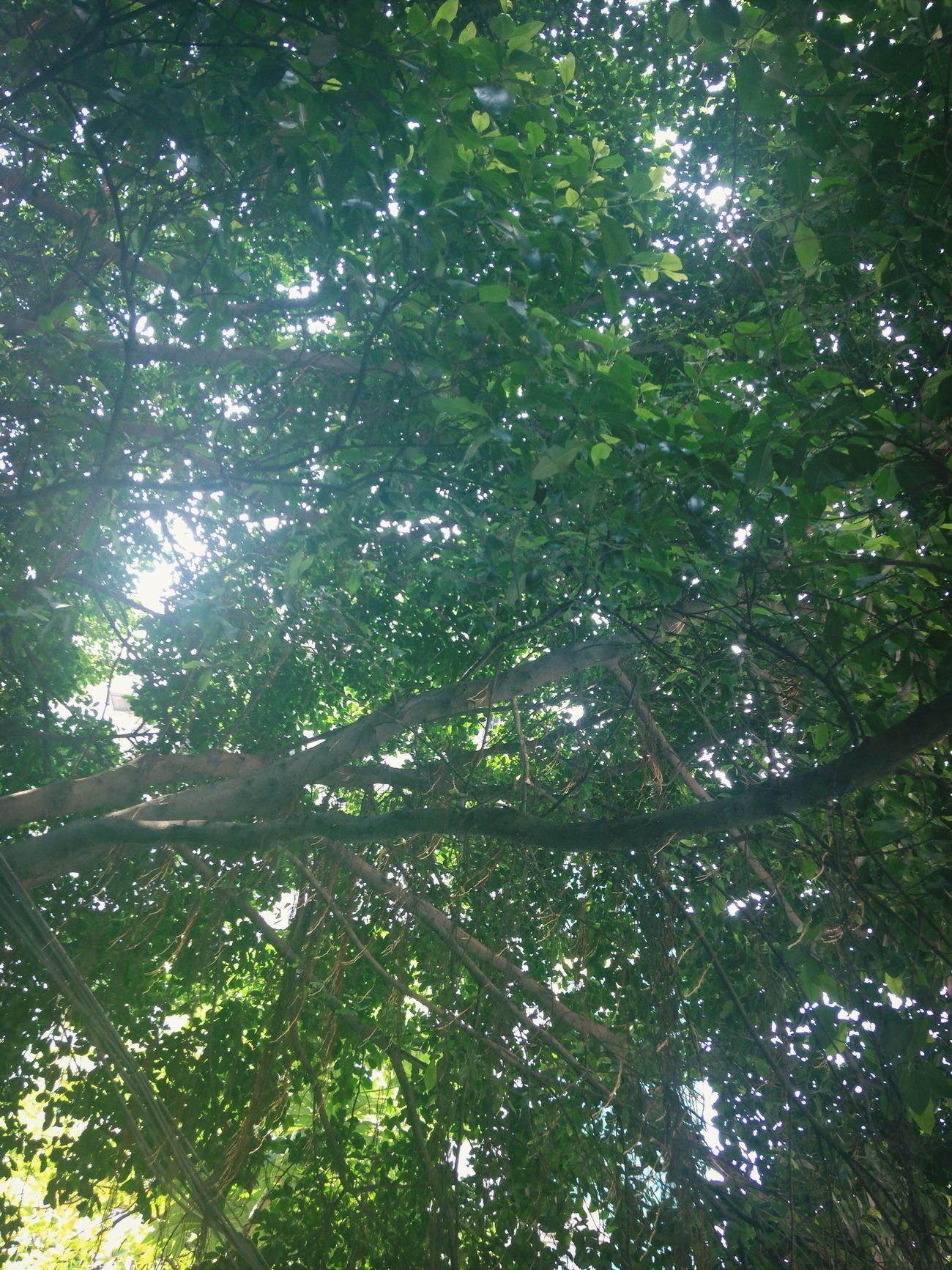 拈花惹草 Hugging A Tree