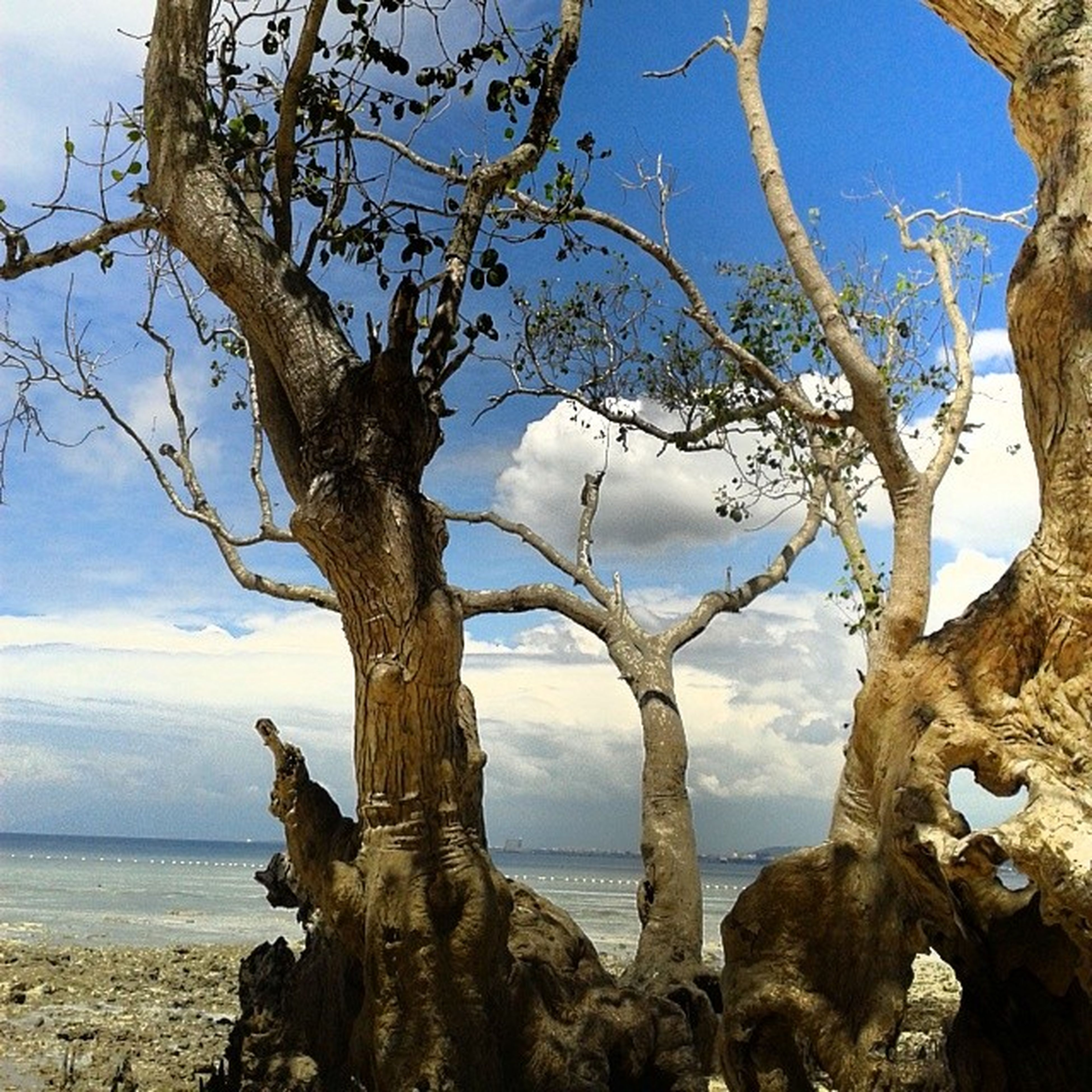 tree trunk, tree, sky, branch, tranquility, bare tree, nature, tranquil scene, scenics, beauty in nature, dead plant, day, sea, no people, outdoors, low angle view, rock - object, textured, beach, landscape