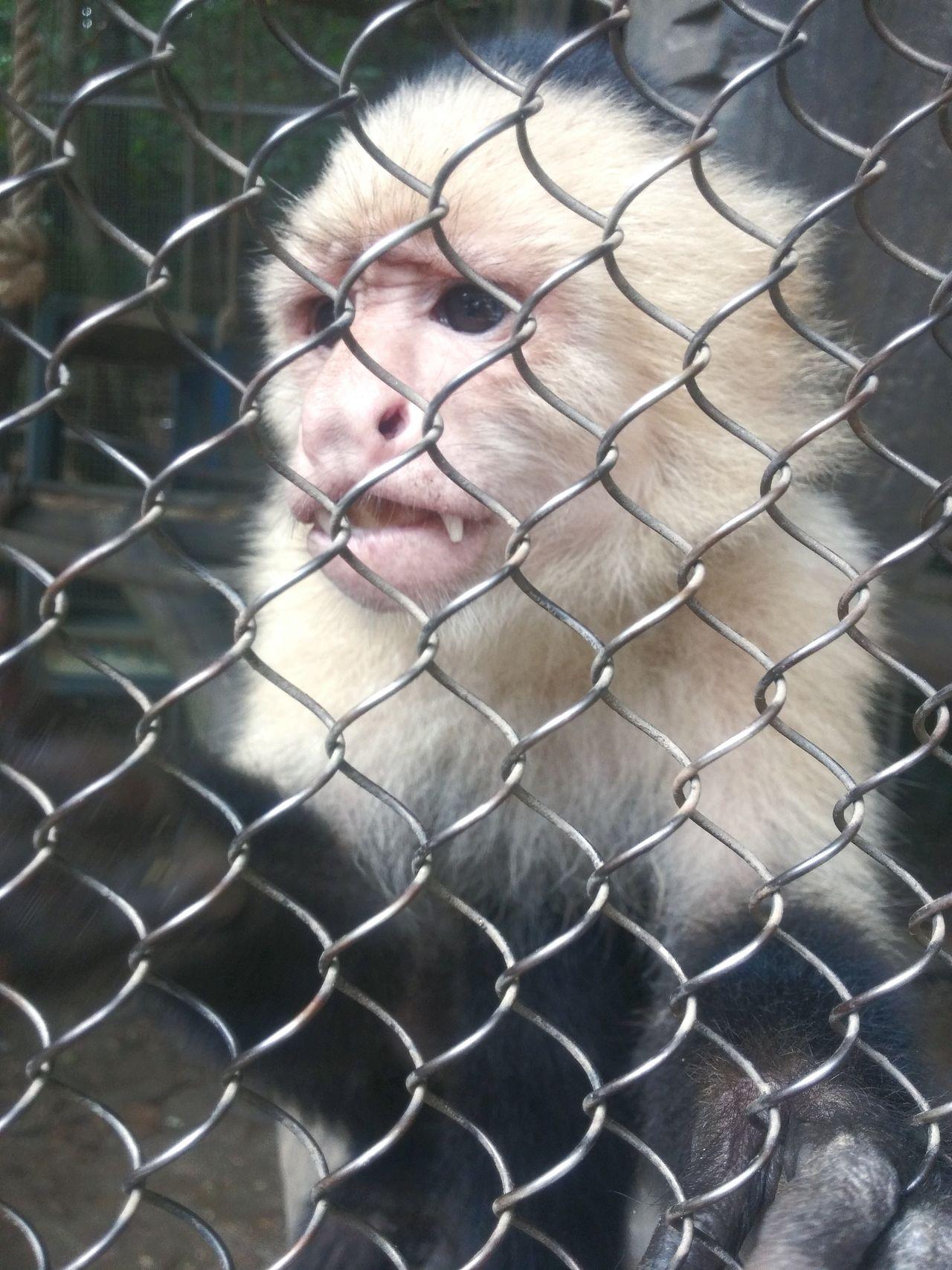 Animals Animals In Captivity Zoos Monkey Anti Animal Abuse Sad Depressed Monkey Caged Animals Exotic Animals Antizoo Caged Monkey Depressing