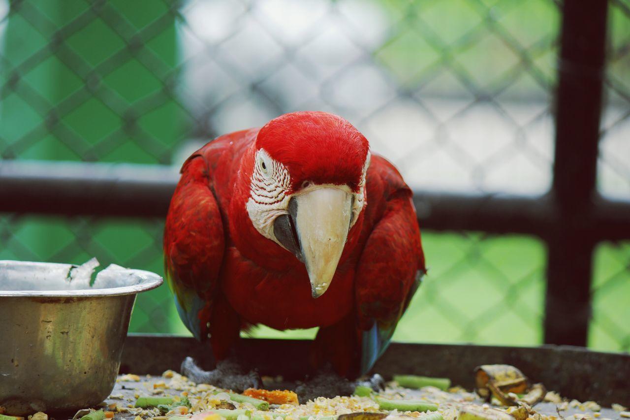 Bird Posing Zoo Photography  Birds Of EyeEm  Check This Out Emperorvalleyzoo Birds🐦⛅ Bird Photography Bird Portrait Zoophotography Trinidad And Tobago