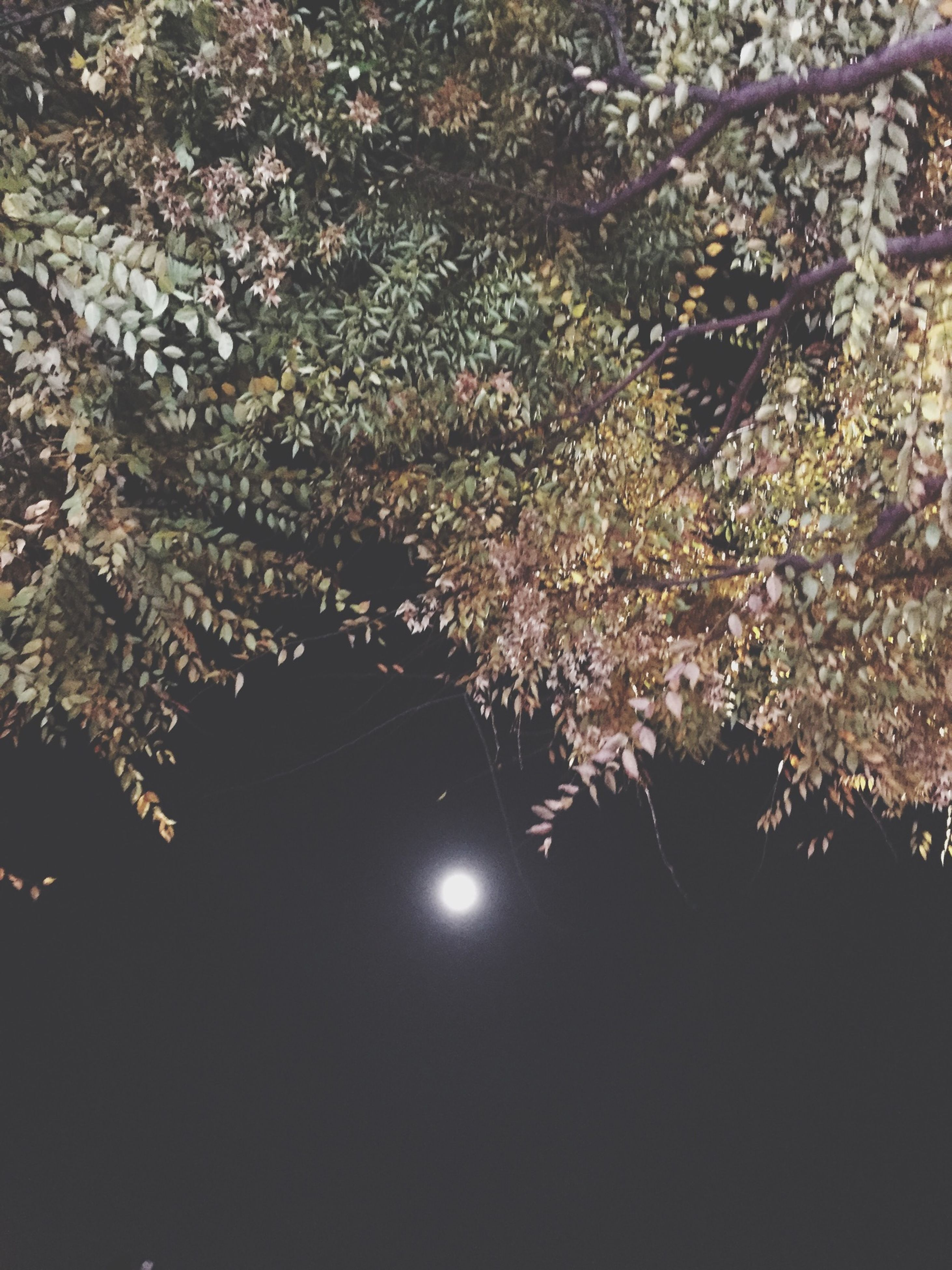 tree, low angle view, branch, growth, beauty in nature, night, nature, outdoors, illuminated, tranquility, no people, flower, fragility, close-up, sky, clear sky, scenics, freshness, backgrounds