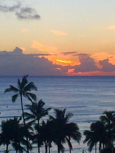 Hawaiian Sunset Island Of Oahu, Hawaii Oahu / Hawaii Oahu, Hawaii Oahu Sunset Palm Trees 🌴 Pacific Sunset Pacific Ocean Sky Pacific Ocean View No People Silhouette An Eye For Travel