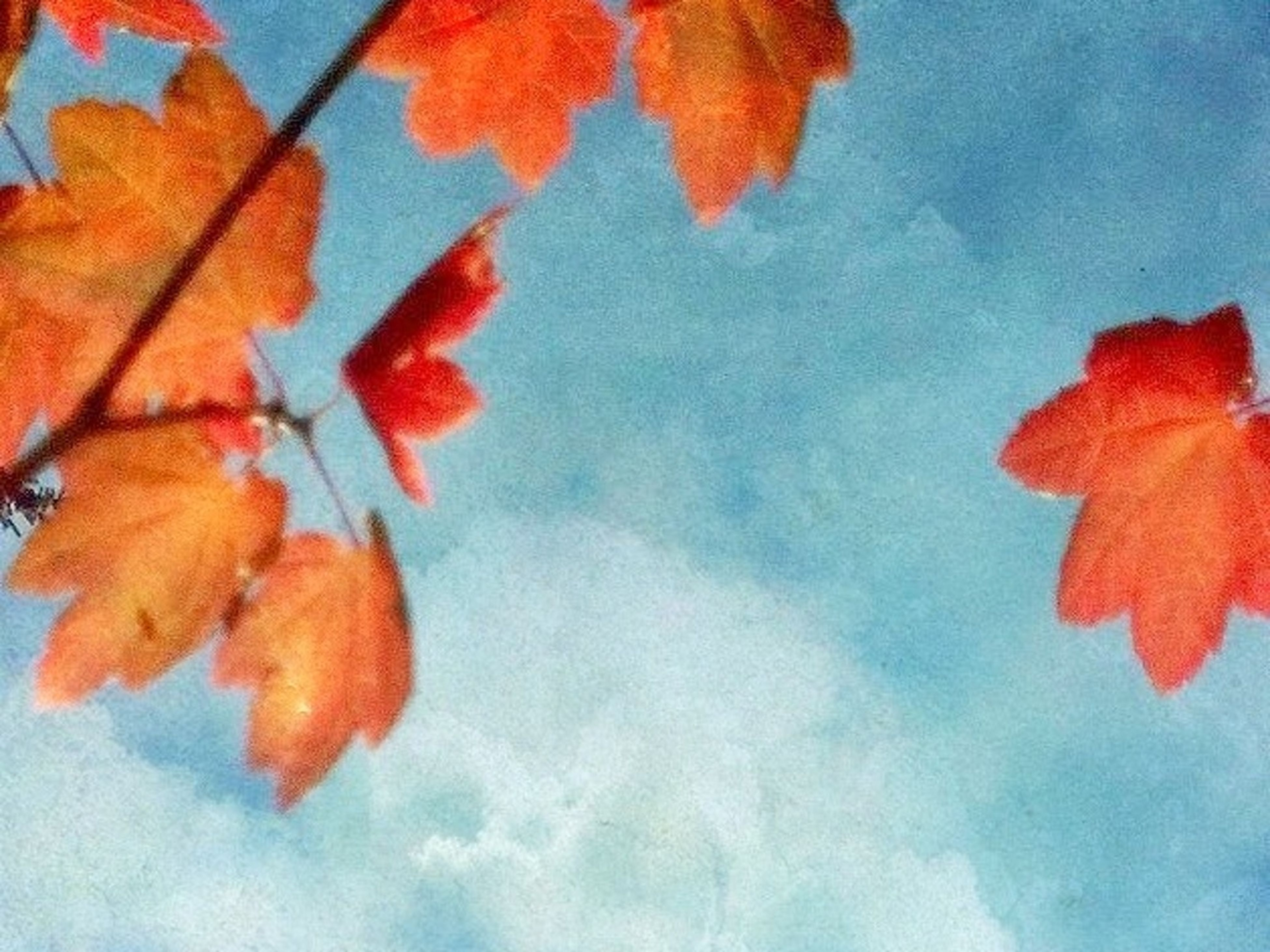 autumn, change, season, leaf, red, maple leaf, orange color, nature, leaves, beauty in nature, low angle view, close-up, growth, branch, sky, vibrant color, fragility, blue, day, tranquility