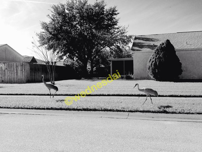 Sandcranes Blackandwhite Photography Outside
