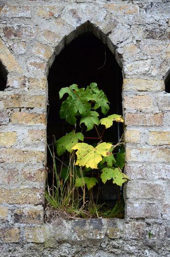 Arch Architecture Brick Wall Building Exterior Built Structure Leaf Nature Overgrown Places Plant Window