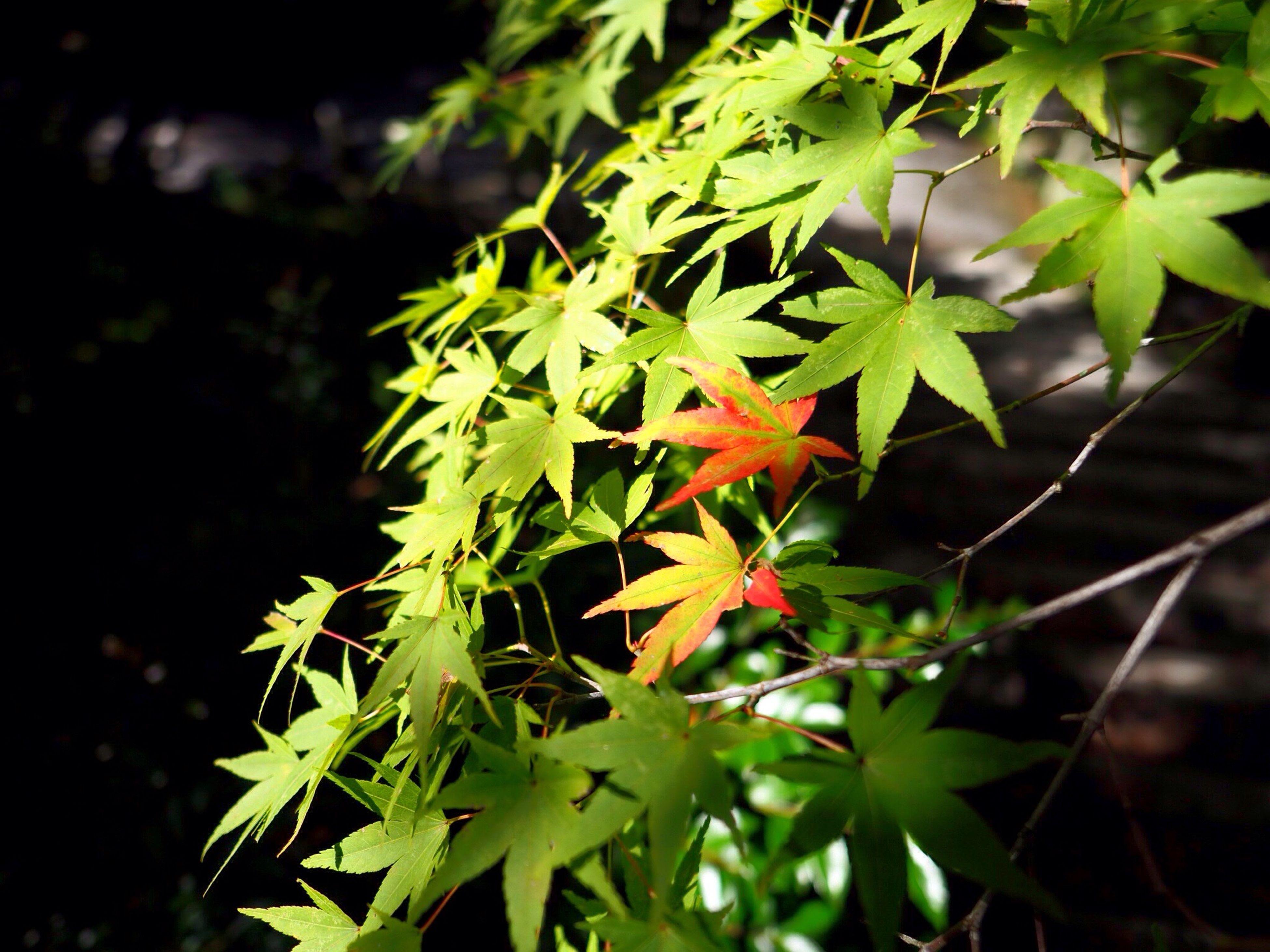 Kyoto Japan Leaves Beginning To Turn Red Tofukuji Tofukuji Temple Temple Green Red Autumn 京都 日本 紅葉の始まり 紅葉 東福寺 寺 緑 赤 Olympus PEN-F