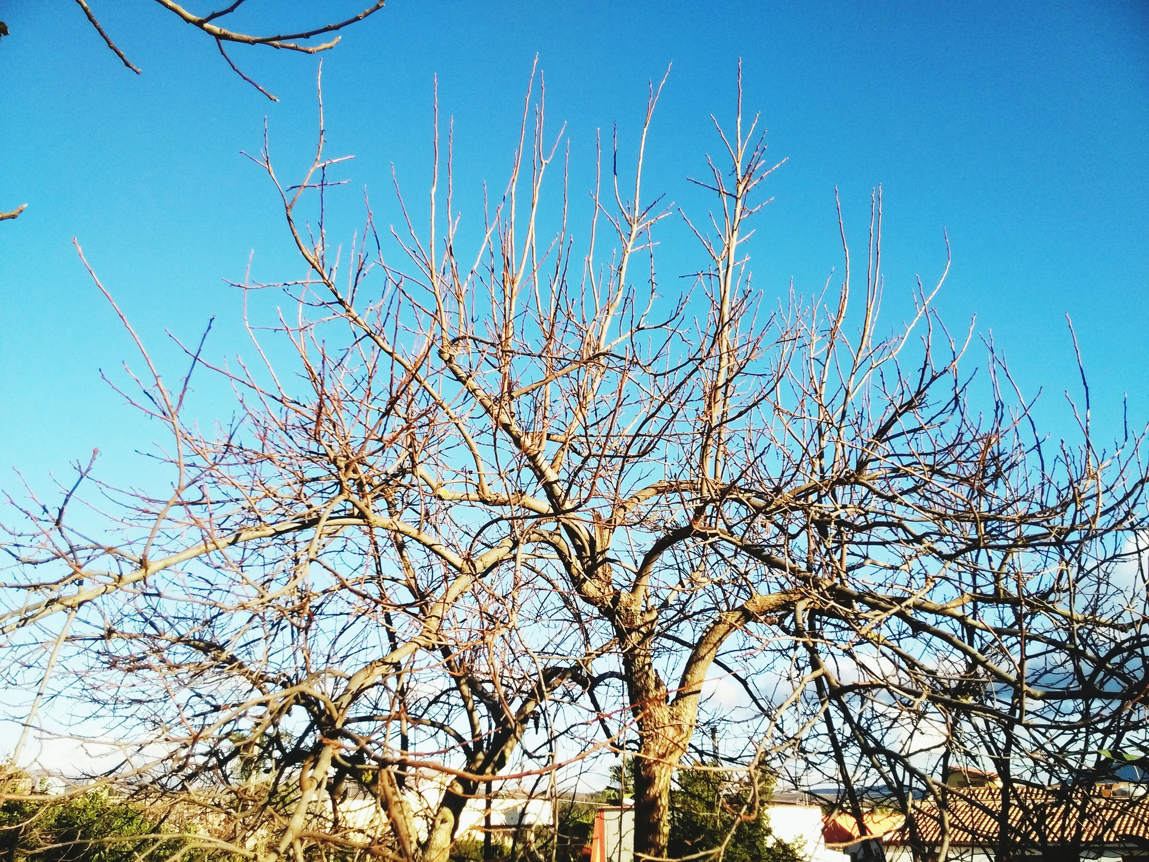 blue, low angle view, clear sky, branch, tree, bare tree, built structure, building exterior, growth, architecture, nature, sky, day, outdoors, sunlight, no people, high section, tranquility, beauty in nature, plant