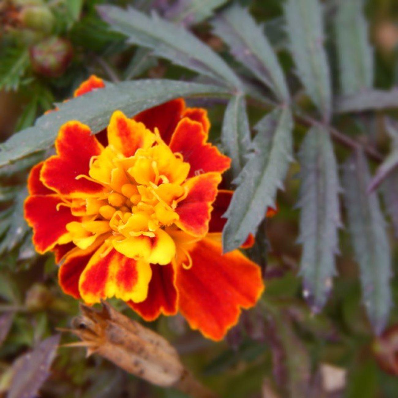 цветы осень Николаев яркийцвет Природа девочкитакиедевочки украина Nikolaev Nature