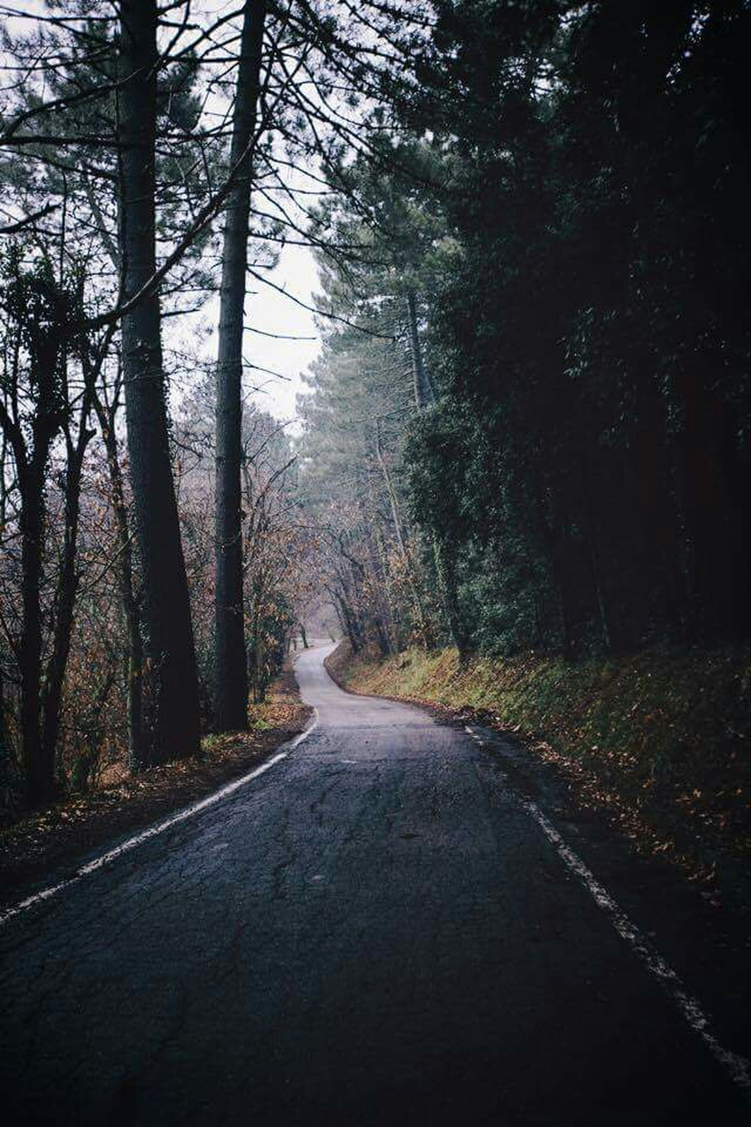 the way forward, tree, road, diminishing perspective, transportation, vanishing point, tranquility, forest, tranquil scene, country road, nature, empty road, beauty in nature, scenics, non-urban scene, empty, growth, no people, outdoors, street