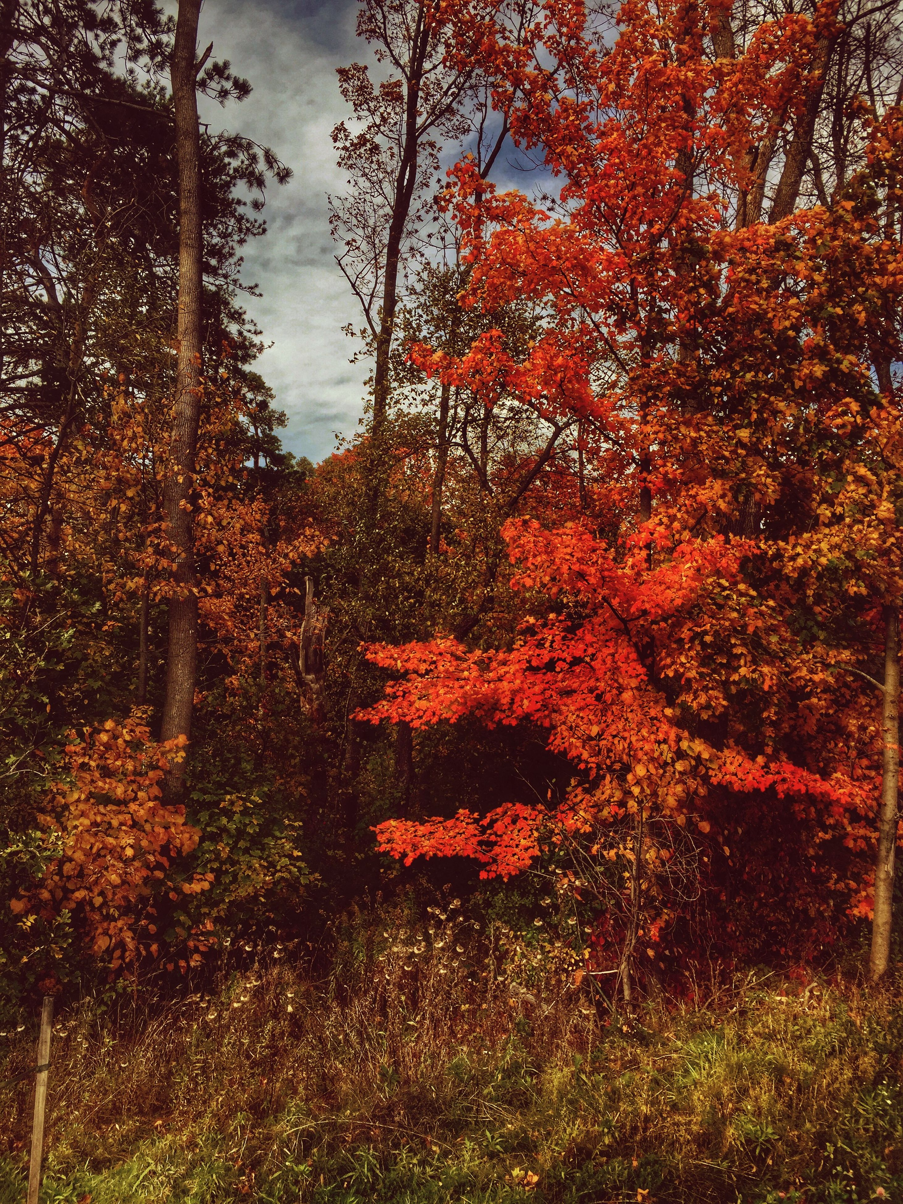 tree, red, growth, tranquility, nature, tranquil scene, sky, autumn, grass, orange color, field, beauty in nature, text, scenics, plant, forest, no people, communication, day, outdoors