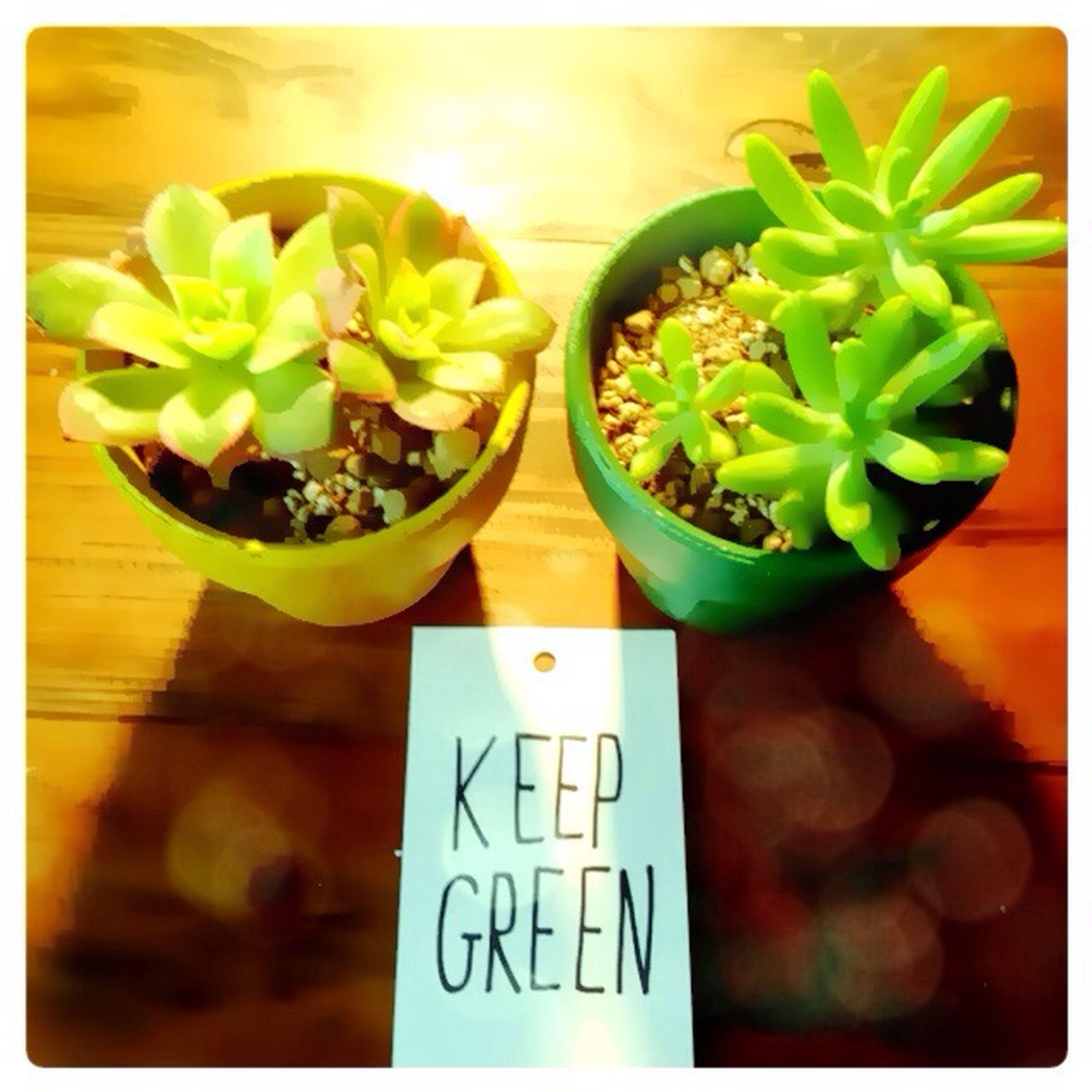 Enjoying Life new Plant ✰ So Cute (OvO)
