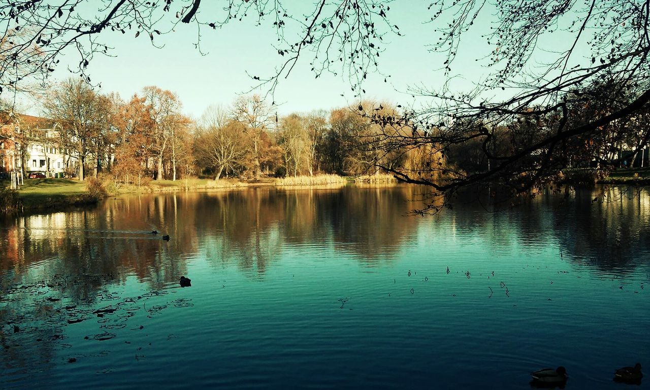 147. Animal Themes Beauty In Nature Day Ducks Ducks In Water Enten Enten Am See Herbstblätte Lake Nature No People Outdoors Reflection Reflection Lake Scenics Sky Sonne Sun Telephone Telephotography Tree Wasser Wasseroberfläche Water Water Surface