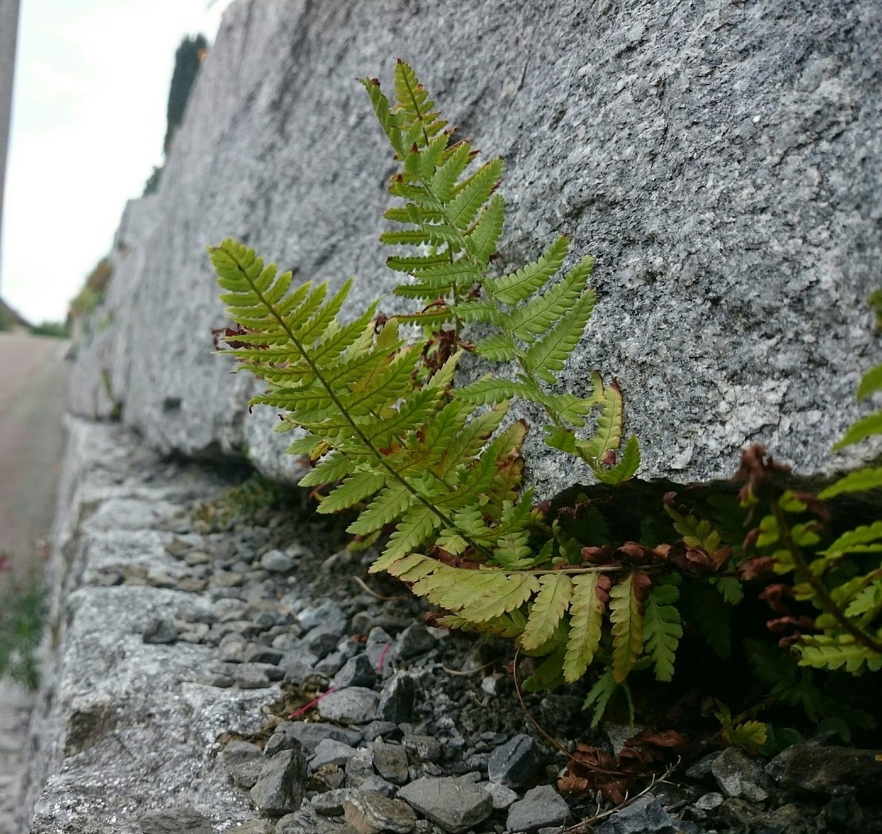 along the wall Fern Switzerland Zurich Oberland