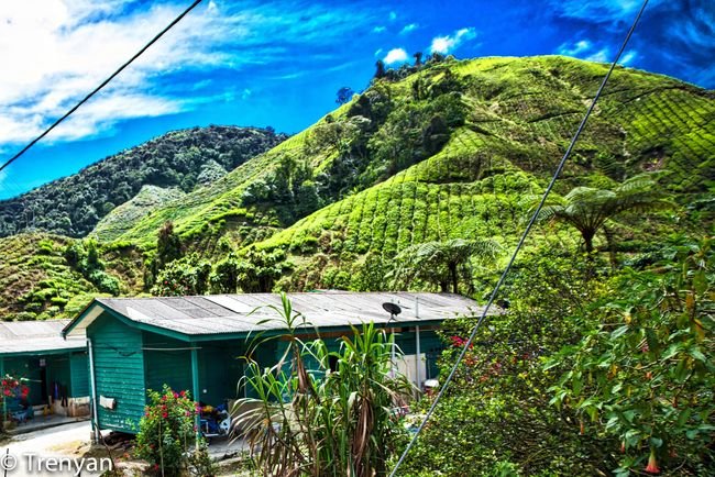 Green Green Color Landscape Lush Foliage Mountain Mountain Range Outdoors Plantation Scenics T Tree Valley Work Hut