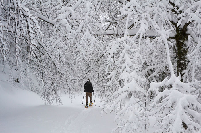 Cold Temperature Ice Nature Snow Snow Shoes Snow Sports Three Walking Winter