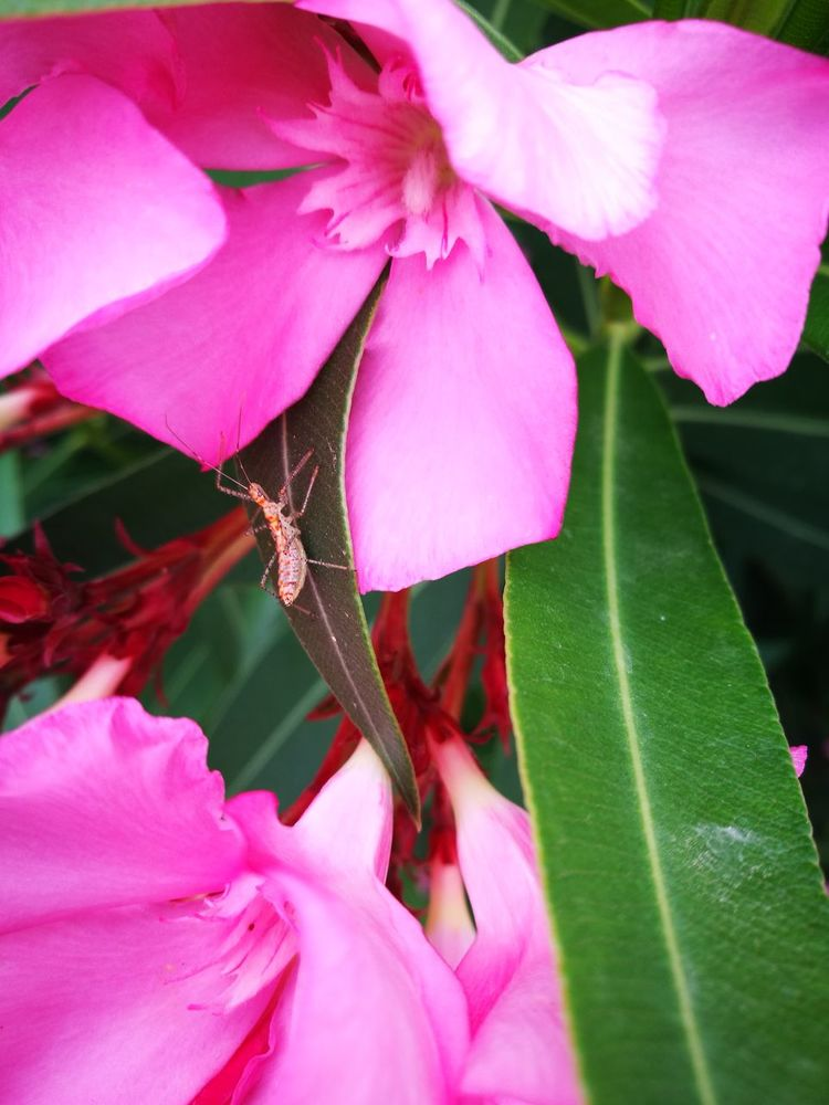 Pink Color Flower Nature Beauty In Nature Petal Close-up Leaf Plant Flower Head Fragility Day No People Freshness Insect Idra Greece Ýdra, Greece Ydra