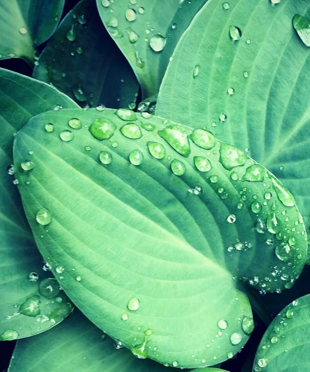 drop, leaf, green color, water, wet, close-up, nature, freshness, growth, raindrop, outdoors, plant, beauty in nature, day, fragility, no people, backgrounds, purity