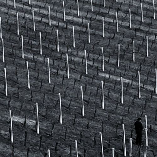 Igersbologna Igersemiliaromagna Igersitalia Ig_bologna Wine Vino Vigneto Atwork Mybologna ViaEmiliaWine