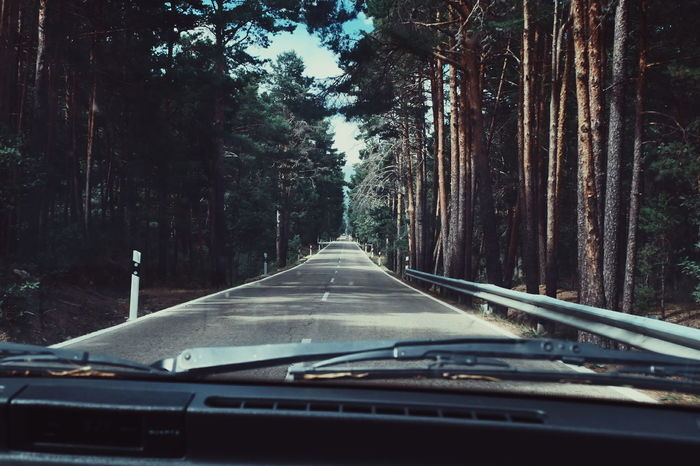 Into the wild Nature Photography Nature Forest On The Road Vintage Style Enjoying Life Into The Wild Into The Woods My Year My View Miles Away Live For The Story The Great Outdoors - 2017 EyeEm Awards Lost In The Landscape