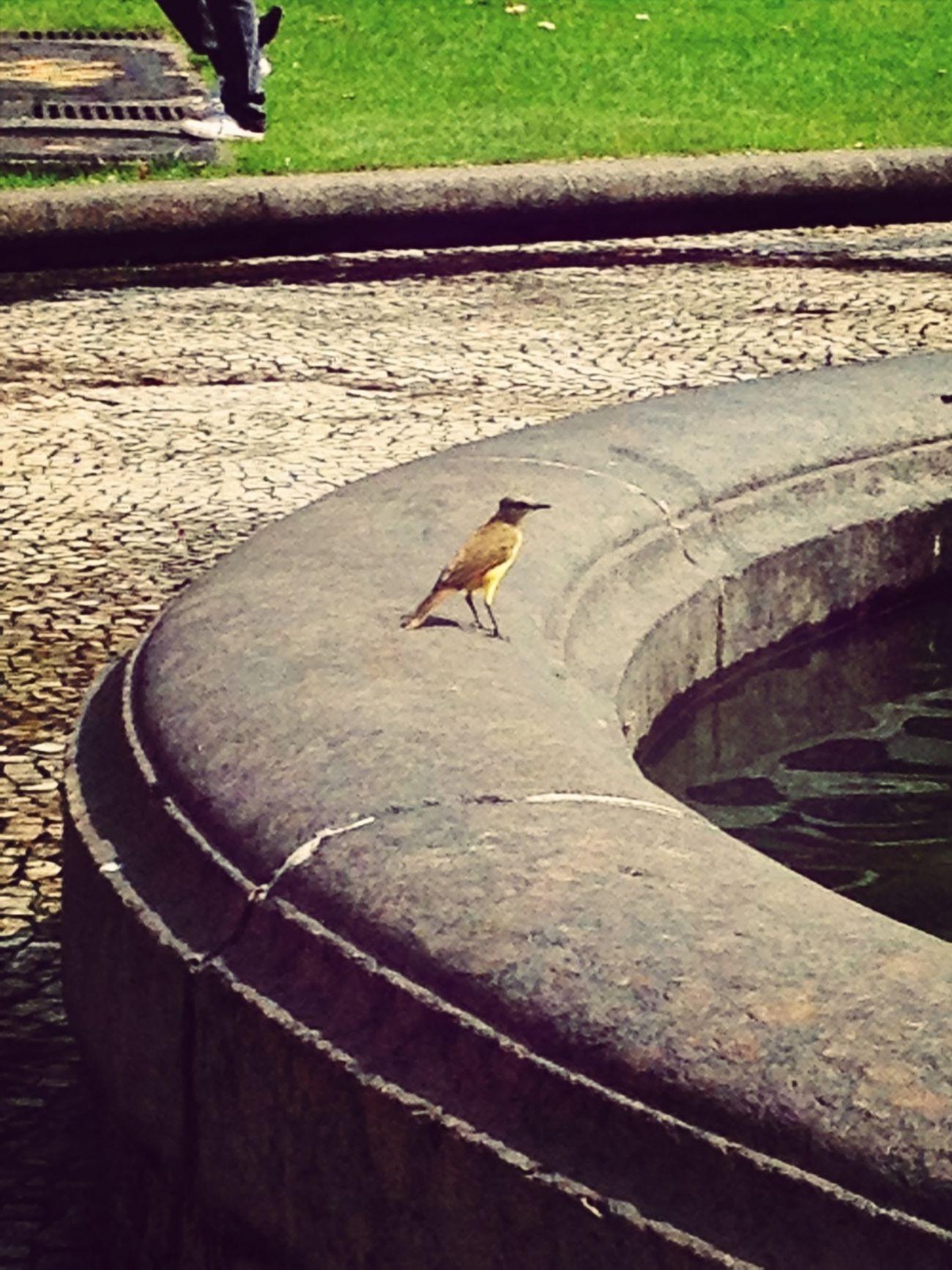 Urban Nature Simple Photography EyeEm Birds
