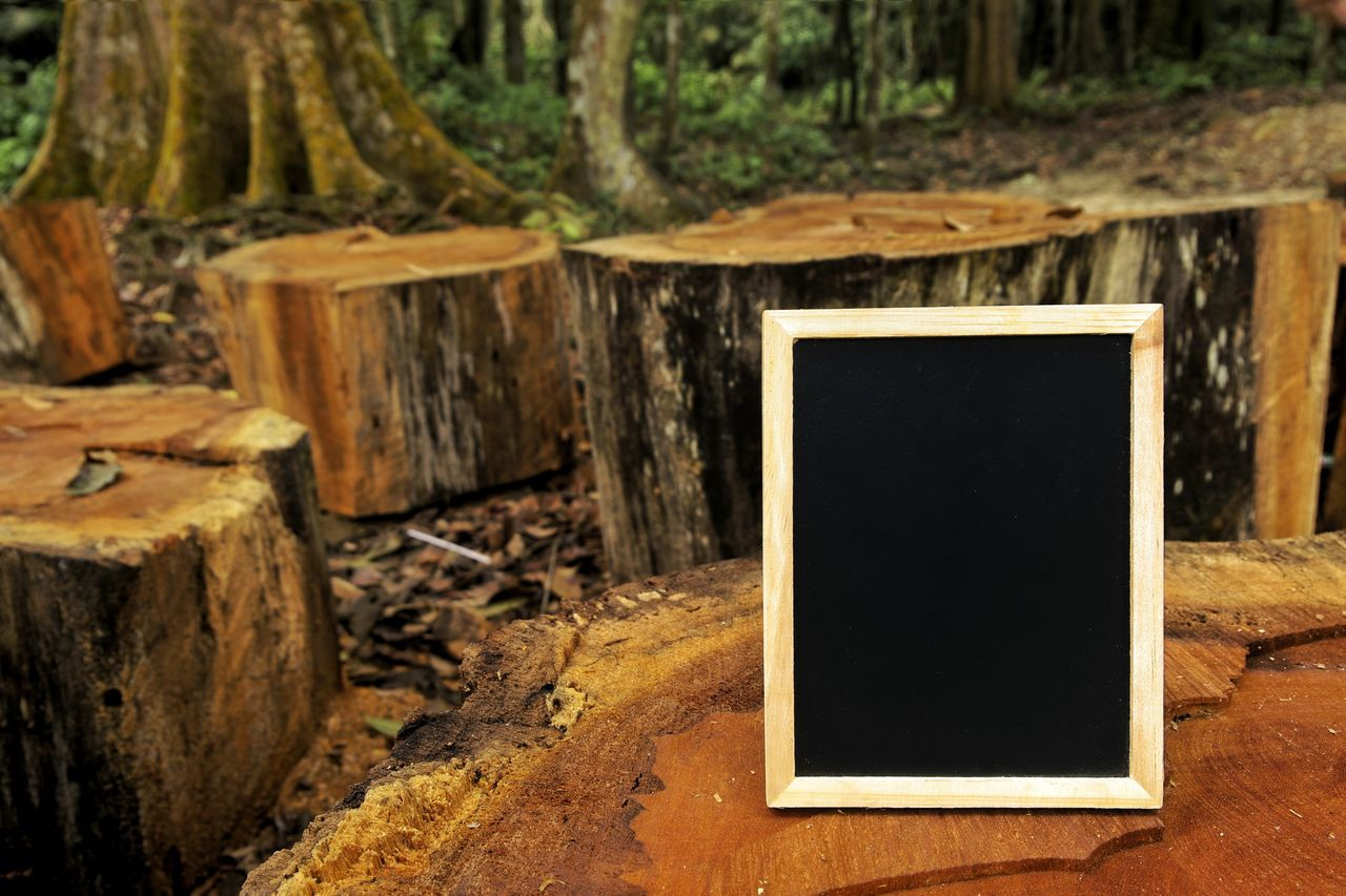 Blackboard on wooden log with forest background No People Photograph Close-up Day Outdoors Nature Hiking Camping Brown Wooden Log Wooden Empty Adventure Chalkboard Picture Frame Copy Space Reminder Nature Abstract Black Color Blank Photography Themes Retro Styled Frame Backgrounds