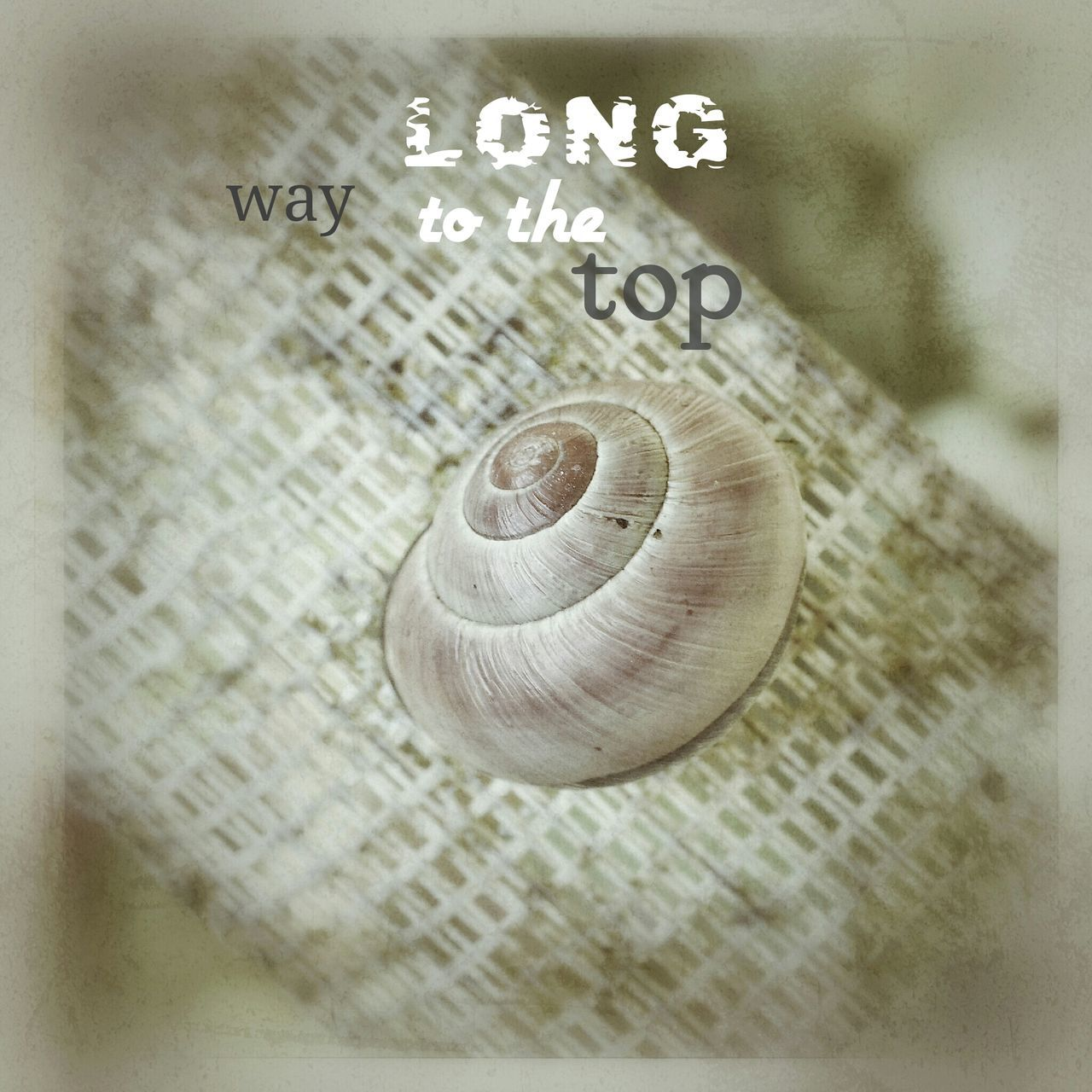 snail, no people, text, animal themes, close-up, one animal, indoors, nature, day