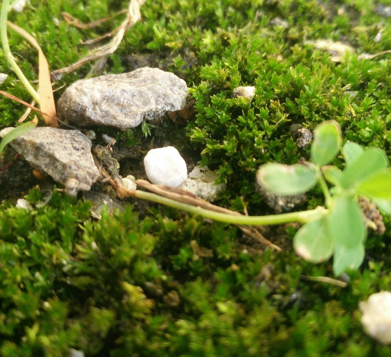 nature, plant, growth, green color, no people, beauty in nature, leaf, grass, outdoors, fragility, day, close-up, freshness