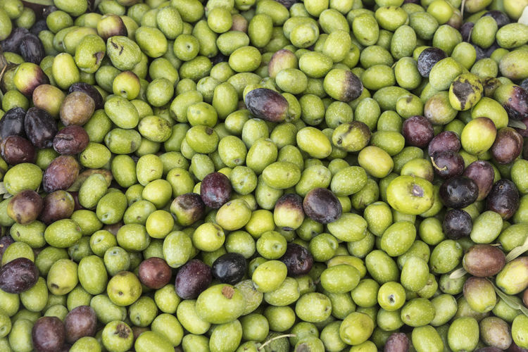 Pattern of fresh olives as a background concept Agriculture Farmland Mediterranean  Nature Olive Production Raw SPAIN Backgrounds Branch Culture Food Fresh Gathered Green Color Harvest Ingredient Italy Leaf Nutrition Organic Pattern Pile Texture Vegetable