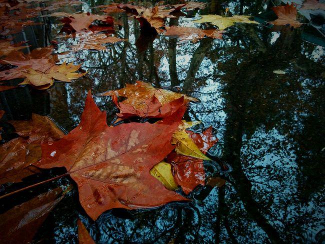 ? 南京师范大学 Nanjing Autumn
