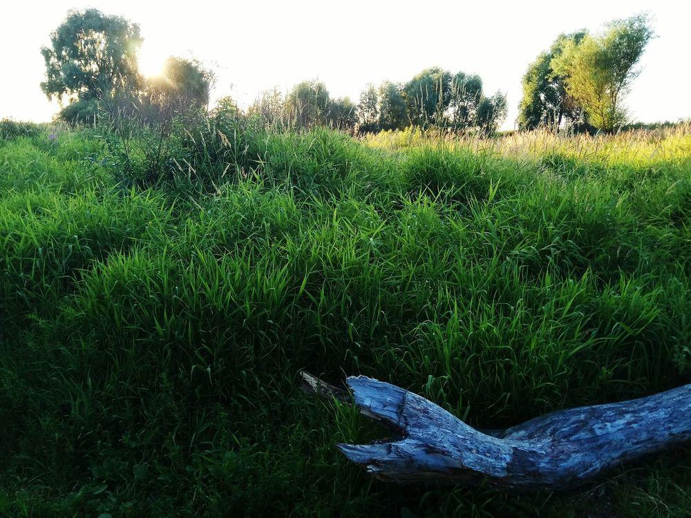 Рассвет🌇🌄 Раннее утро Русское поле зелень  природароссии Nature_collection Russian Nature Morning Green Color