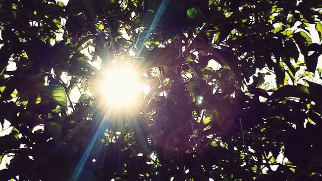 Tree_collection  Sun_collection
