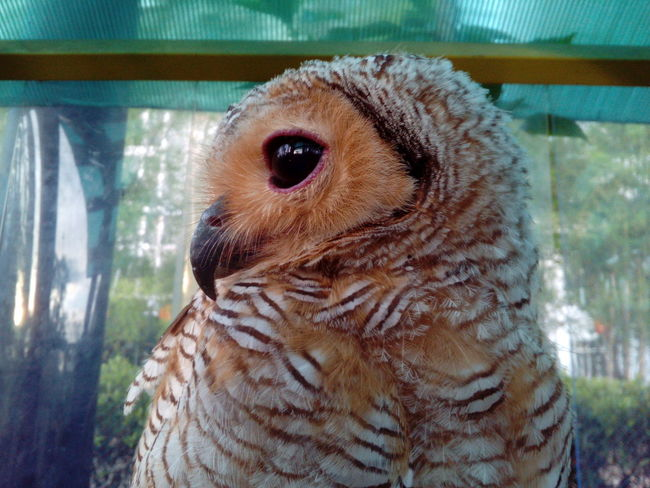 One Animal Animal Themes Close-up Bird Animal Wildlife Animals In The Wild Indoors  No People Bearded Dragon Day Nature Mammal Owl Owls Are Cute Owls💕 Owllife Owl Art Owl Eyes Animals Focus On Foreground Portrait Looking At Camera Outdoors Bird Of Prey