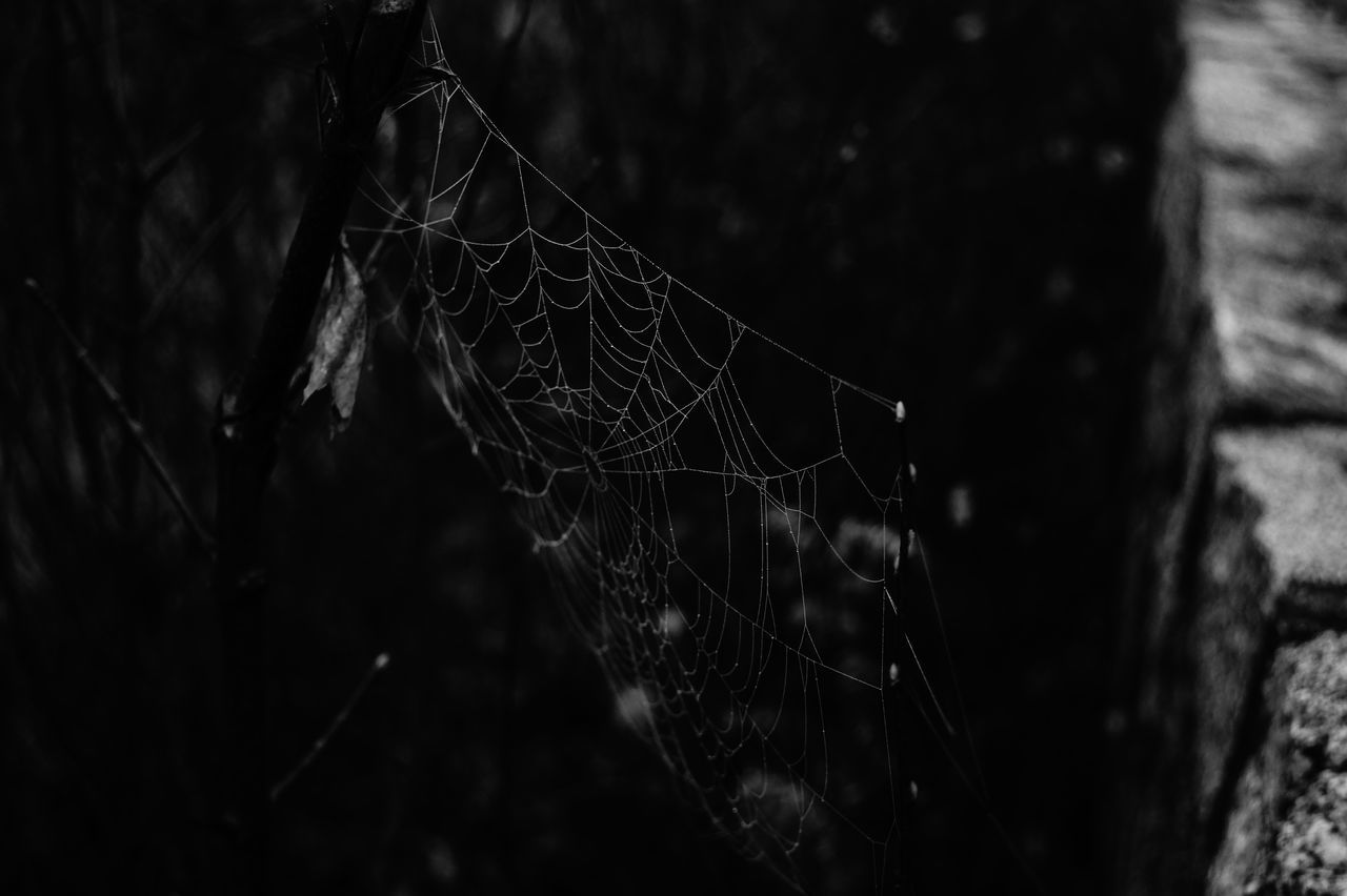 spider web, focus on foreground, web, outdoors, no people, day, nature, close-up, spider, trapped, water, beauty in nature, animal themes