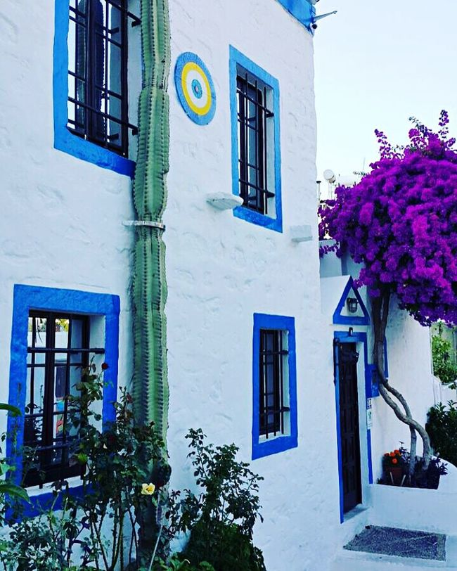 Bodrum Architecture Window Building Exterior Built Structure Residential Structure House Residential Building Growth Flower City Plant Balcony Day Blue Outdoors Sky Houseplant City Life No People Freshness