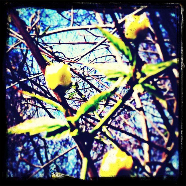Zomaar, de achtertuin. Flowers Mijn Tuin The World Around Me Nature