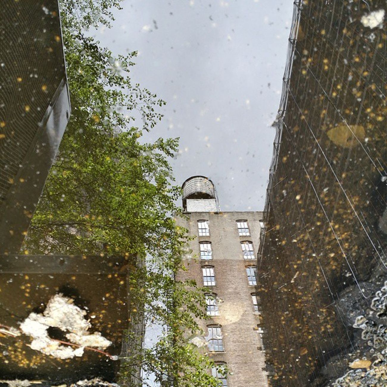 Dirty roof puddle reflection NYC Watertower Watertank Puddle rain roof reflection nofilter picoftheday tree buildings construction