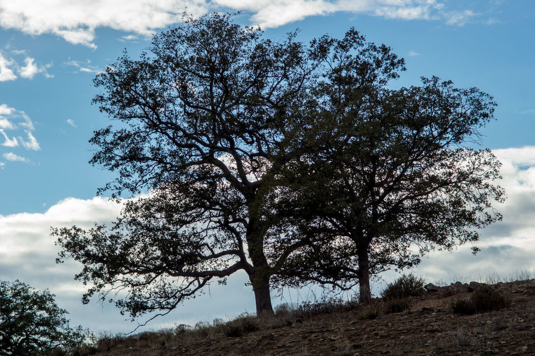 Tree Nature Cloud - Sky Sky No People Outdoors Branch Beauty In Nature Day Nature Oak Scenics Mountain Range Tranquil Scene Forest Landscape