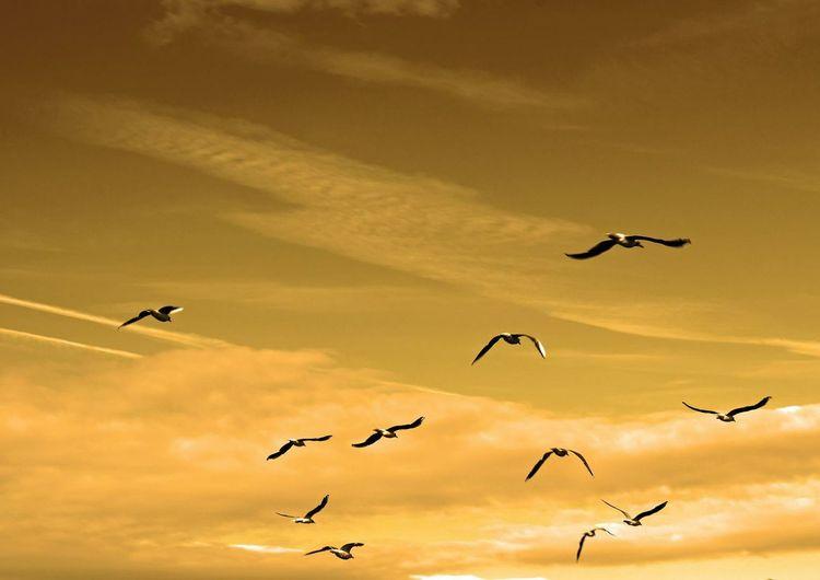 Aire Oiseaux Soir Amazing