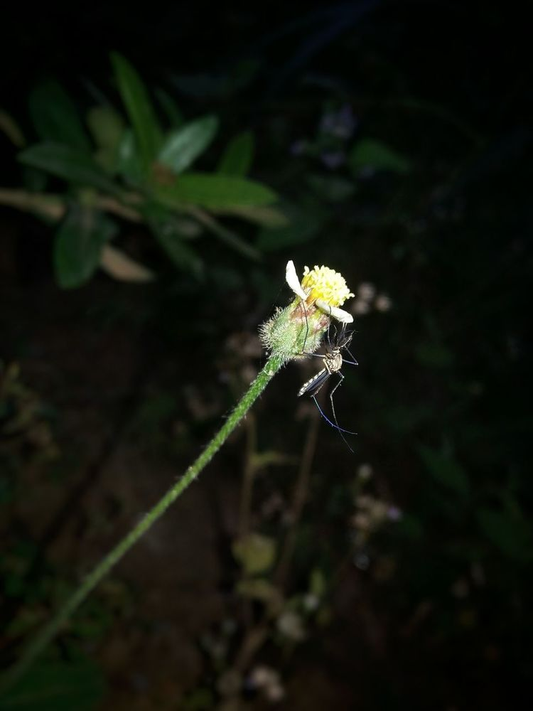 Mosquito on a flower - EyeEm Mosquito on a flower - 웹