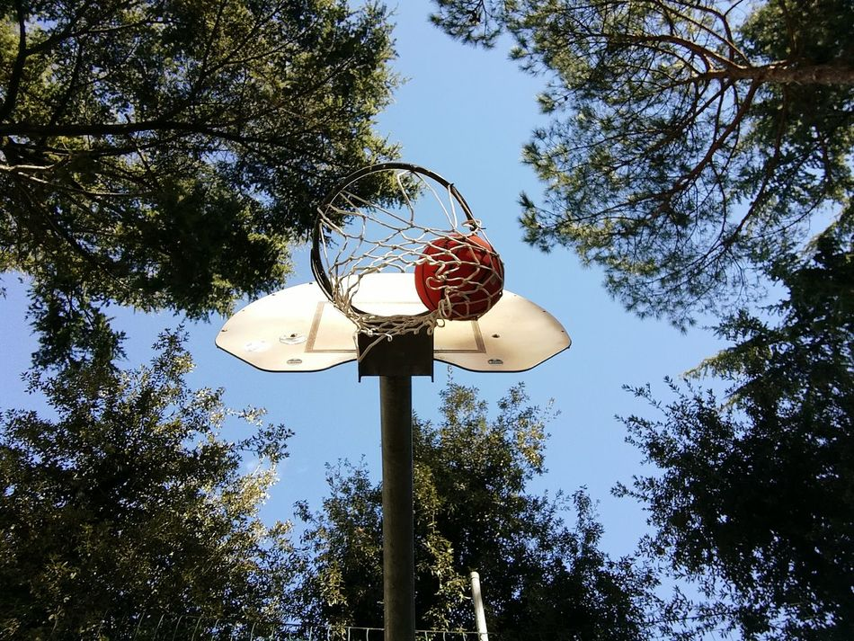 Low Angle View Tree Sky No People Day Sport Nature Ball Outdoors NbanFamily Land Vehicle Archival NBA Scenics Love Tree Growth Basketball Basketball Game USA Photos Sports Photography Sky And City