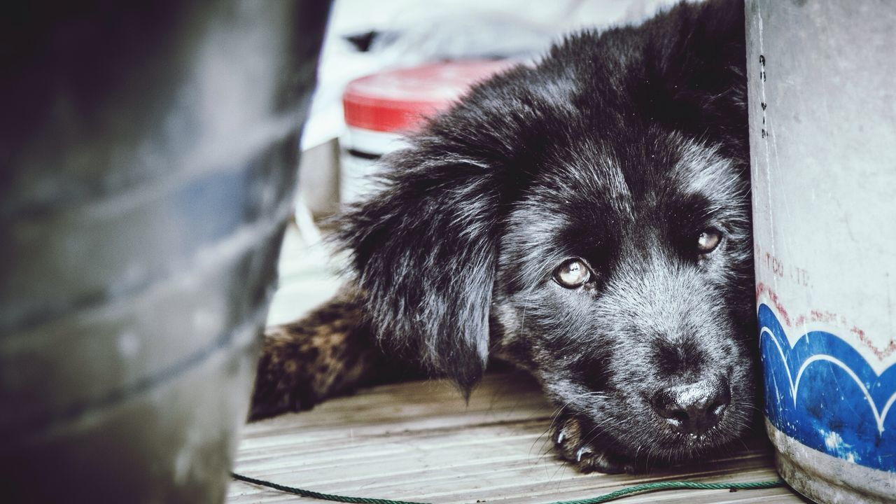 Dog Street Photography Animal Street