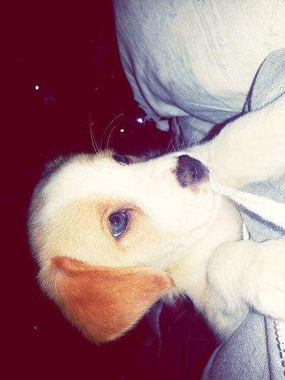 Pet in love ❤