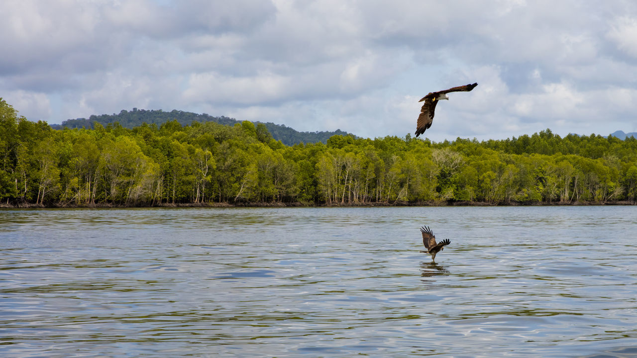 Beautiful stock photos of hunting,  Animal Themes,  Beauty In Nature,  Bird,  Bird Of Prey
