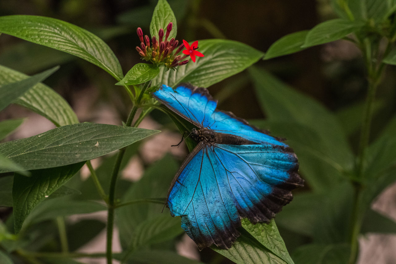 Botanical Gardens Butterfly Farm Ecuador Flower Butterfly South America Ziseetheworld